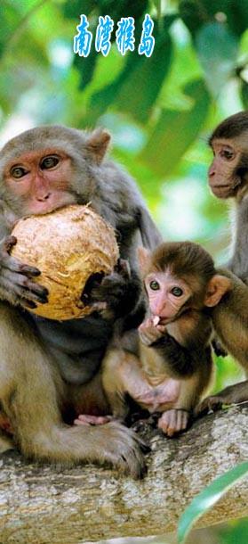 南湾猴岛旅游线路